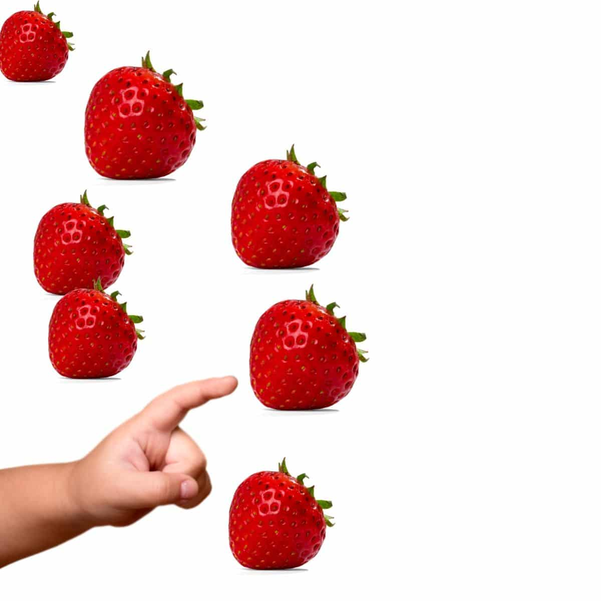 Child pointing to Strawberries